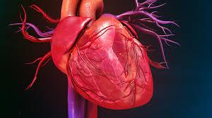 Cardiol - na hypertenziu - feeedback - Slovensko - ako použiť
