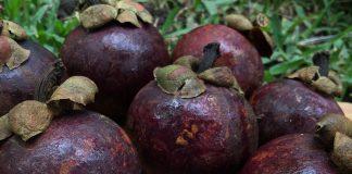 Mangosteen Superfood – na chudnutie - Slovensko – užitočný – mienky